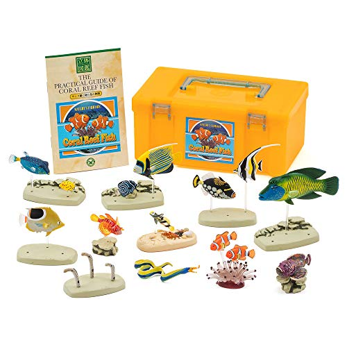 Frog Colorata Real Figure Box