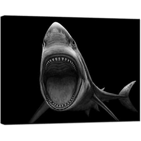 Amazon Com Glitzfas Great White Shark Art Print Black Wood Framed Wall Art Picture For Home Decoration Black And White 14 X14 35cmx35cm Framed Posters Prints