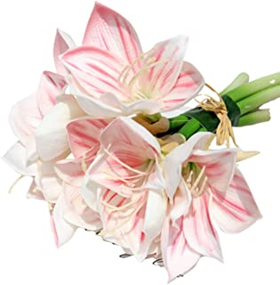 Best clivia flower arrangements Reviews