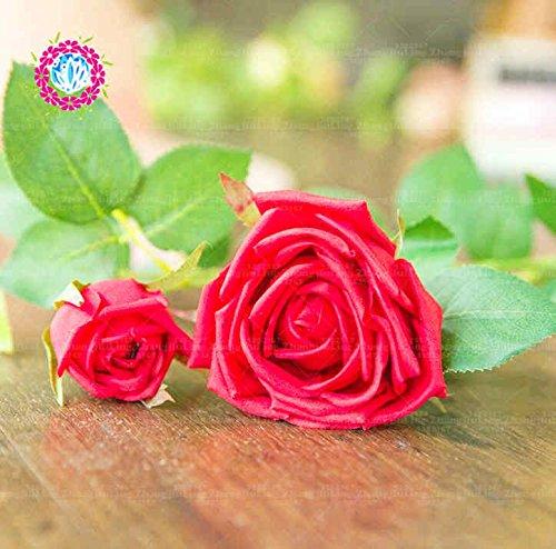 100pcs coloré Graines Rose avec bord rouge, couleur rare jardin populaire Graines de fleurs vivaces Bush ou Bonsai Fleur 8