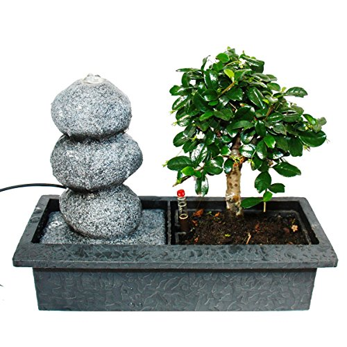 """Indoor-Bonsai mit Zimmer-Brunnen\""""Balance\"""" - 3 Kieselsteine - Easy Care System"""
