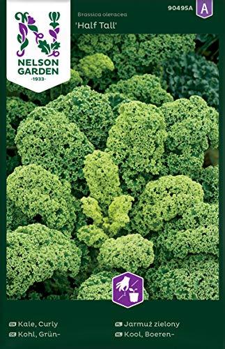 Grünkohl Samen Half Tall - Nelson Garden Gemüse Saatgut - Grünkohlsamen (425 Stück) (Einzelpackung)