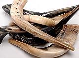 Auténtico y de alta calidad pulido Shofar (Tamaño 70 cm-80 cm))