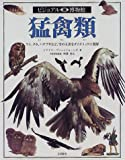 猛禽類 (ビジュアル博物館)