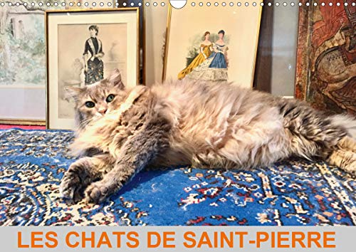 LES CHATS DE SAINT-PIERRE (Calendrier mural 2020 DIN A3 horizontal): Les chats de gouttière en mode survie (Calendrier mensuel, 14 Pages ) (Calvendo Animaux)