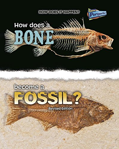 How Does a Bone Become a Fossil? (How Does It Happen?)
