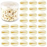 Weoxpr 200 Pcs White Natural Spiral Seashell Beads, 16-18mm Beach Cowrie Shells Large Sea Shells Charms and Beads for Jewelry Making Accessories, Party Wedding Decor, and Craft Project (No holes)
