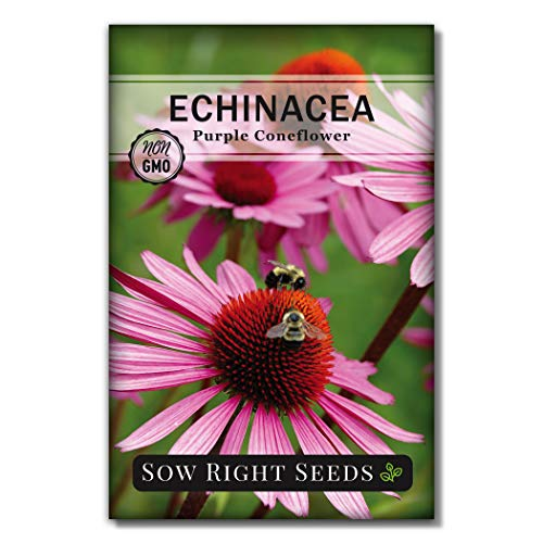 Sow Right Seeds - Purple Coneflower/Echinacea Flower Seeds for...
