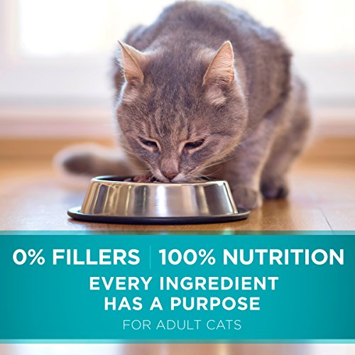 Purina ONE Sensitive Stomach, Sensitive Skin, Natural Dry Cat Food, Sensitive Skin & Stomach Formula - 16 lb. Bag