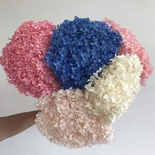 Flores Secas Hortensias Naturales flores secas  Marca yao