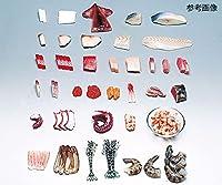 イワイサンプル フードモデル 魚介類 さけすじこ30g 4-63