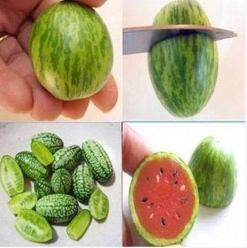 20 graines rares Mini melon d'eau Cucamelon non OGM Fruit Potager Plante