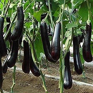 Davitu 50個/パックロングナス種子庭の野菜DecorationPlant種子