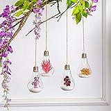 Nuptio 4 Stück Glas Hängenden Pflanzer, Glühbirne Geformt Hängenden Luft Pflanzenhalter, Blumentöpfe Pflanzenbehälter Terrarium Hängenden Glaskugel für Luftpflanzen, Sukkulenten oder Kleine Pflanzen