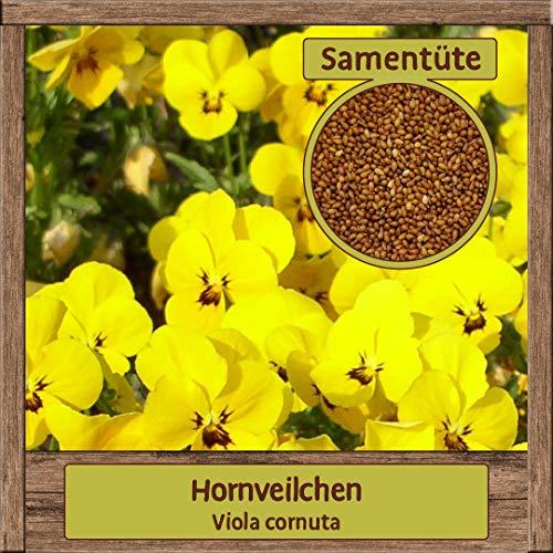 Hochwertige Hornveilchen-Samen Saatgut zweijährig aus natürlichem Anbau Herkunftsland Deutschland