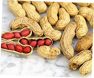 JGA Live Tennessee Red Peanut Non-Treated with Yellow Flowers - RK176 (10 Plants)