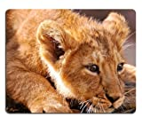 Lion Cub Lying Fear Muzzle Mouse Pads Customized Made to Order Support Ready 9 7/8 Inch (250mm) X 7 7/8 Inch (200mm) X 1/16 Inch (2mm) Eco Friendly Cloth with Neoprene Rubber Liil Mouse Pad Desktop Mousepad Laptop Mousepads Comfortable Computer Mouse Mat Cute Gaming Mouse pad