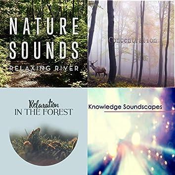 Naturgeräusche für die Konzentration