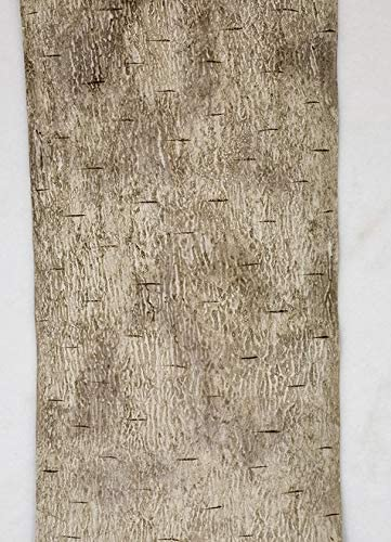6 Rapid rise Foot x Import 12 Inch Roll of Synthetic Birch Dark in Bark or Wh Grey