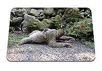 22cmx18cm マウスパッド (3つま先ナマケモノの赤ちゃんの散歩) パターンカスタムの マウスパッド