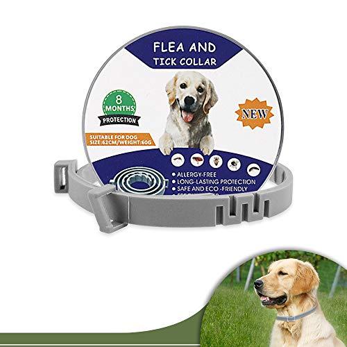 EAWEN Tamaño Ajustable Collar Antiparasitos para Perro, no tóxico, Collar Antiparasitos para Perro Gatos, protección Impermeable Mejor Collar, Control de pulgas, Mosquitos y garrapatas, 8 Meses