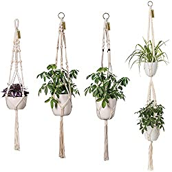 Christmas gifts for plant lovers - Carmen Whitehead Designs