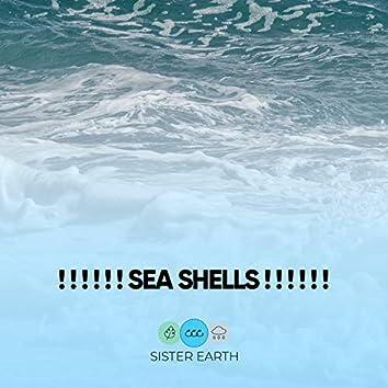 ! ! ! ! ! ! Sea Shells ! ! ! ! ! !