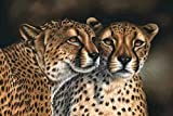 Arte Animal Jaguar Tigre Pintura Mural Pintura al óleo Sala de Estar Hogar Decoración de Pared Moderna Pintura 1