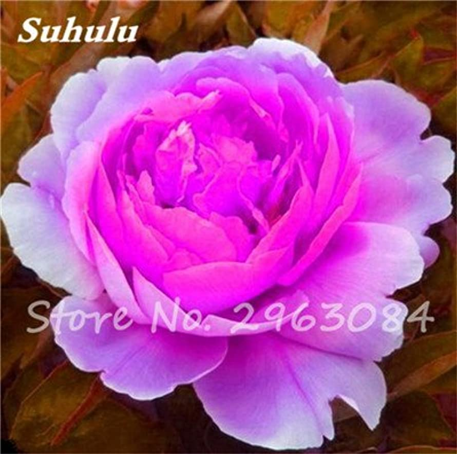 Sale 10 Pcs/Bag Rare Color Peony Seeds Heirloom Sorbet Robust Peony Bonsai Flower Seeds Pot Tree Peony Flower Seeds Garden Plant 24