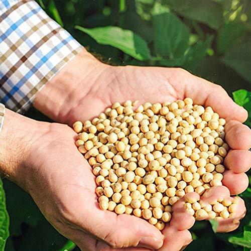 TENGGO Egrow 20pcs/Bolsa Habas de Soja Semillas Verduras Verdes Semillas