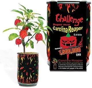 Challenge Super Hot Carolina Reaper Plant Kit