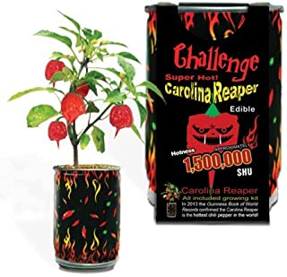 Best ghost pepper plants for sale Reviews