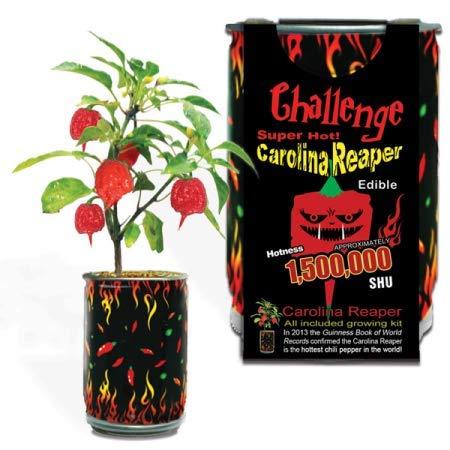 Magic Plant Moruga Scorpion Pepper Cultivez votre propre poivre plus chaudes dans le monde ! 2 000, 000SHU 3/85 gr