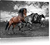 Schöne Wildpferde schwarz/weiß Format: 80x60 auf