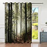 Marteylink Cortinas Opacas,Dark Forest Route Surrounded By Fog in The Sunshine Day Time in Mother Earth,Sala,Dormitorio,Cortina,Vida Familiar,Decoracion