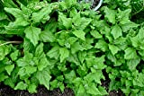 New Zealand Spinach 100 Seeds Tetragonia Bulk Drought & Heat Tolerant OP