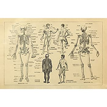 Best human bones diagram Reviews