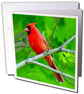 3dRose Red Cardinal - Greeting Cards, 6 x 6 inches, set of 12 (gc_3121_2)