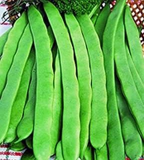 Stangenbohnen Hilda Schwertbohne Züchtersaat 125 g Samen