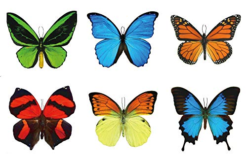 Large Butterfly Temporary Tattoos by Butterfly Utopia (6 Sheets)