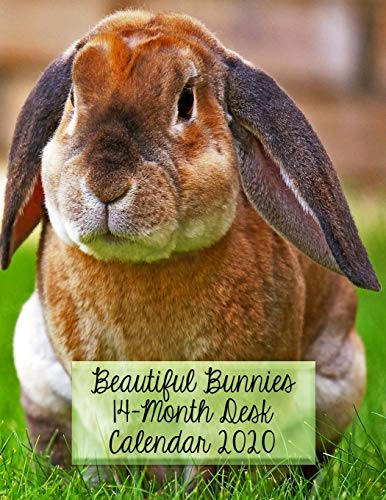 Beautiful Bunnies 14-Month Desk Calendar 2020: A Beautiful Rabbit for Each Month in Glorious Color!