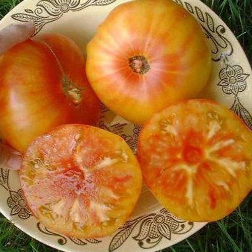 Tomate Ananas Lot de 25 graines 100% naturelles sans poêle à élevage chimique ou génie génétique du Portugal - délicieusement fruité anananas