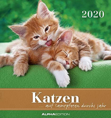 Katzen 2020 - Postkartenkalender (16 x 17) - Cats - zum aufstellen oder aufhängen - Geschenkidee - Tierkalender - Gadget