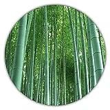 Bambú gigante (bambú) / 50 semillas/Planta de invierno/Crece 10 metros en tiempo récord/Ideal...