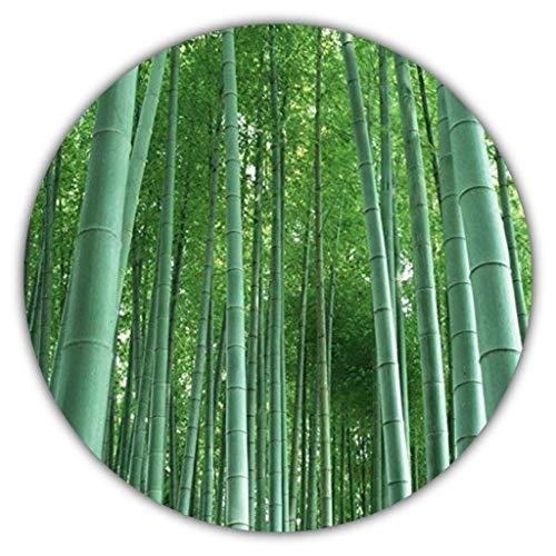 Riesenbambus - 50 Samen - schnelles Wachstum - winterharte Pflanze - Gartenpflanze