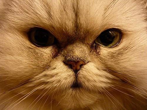 Lsping 3D größtes Puzzle der Welt 1000 Teile Katzen-Nahaufnahme-Augen-Schnauze 50x70cm
