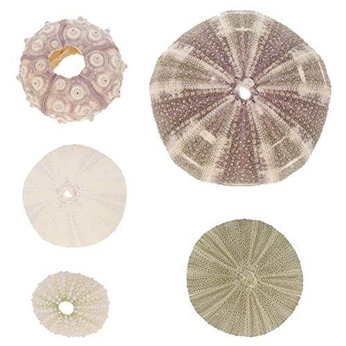 SOIMISS 5 Piezas Erizos de Mar Naturales Playa Náutica Conchas de Mar Florero Relleno Boda Ornamentos para Plantas de Aire DIY Artesanía Y Acuario Pecera Paisaje Decoración