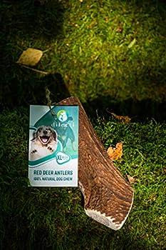 Chevreuil à mâcher pour Chien – Bois de cerf Fendu pour Chien – Longue durée de Vie Naturelle (Taille XL,111g-150g)