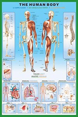 1art1 Der Menschliche Körper - Anatomie Poster 91 x 61 cm