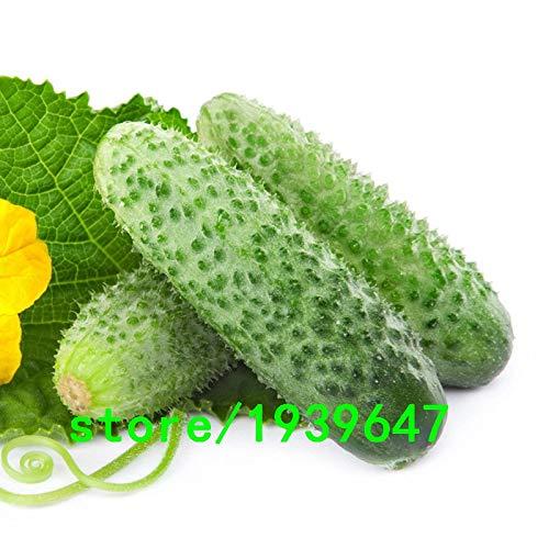 AGROBITS Japon bio Graines Concombre Cour Jardin Balcon Bonsai pot de légumes Semences Cucumis Graines 50PCS: Autre